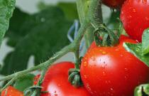 First National Tomato Stakeholders summit