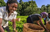 Grow Africa and FANRPAN collaborate on policy matters