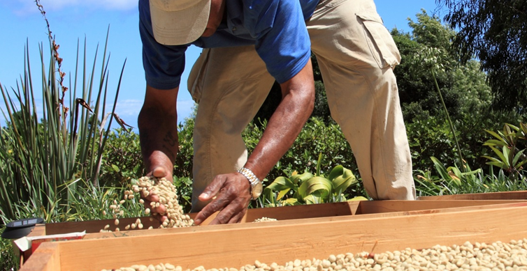 Grow Africa Smallholder Working Group focuses on implementing inclusive investments