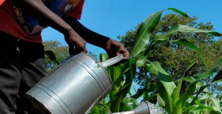 Maize Value Chain Partnership Launched
